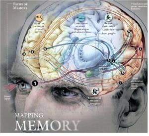 Image of human brain memory